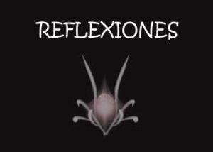 anvistas-reflexiones