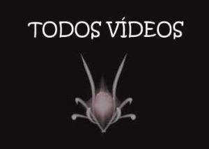 anvistas-todos-videos