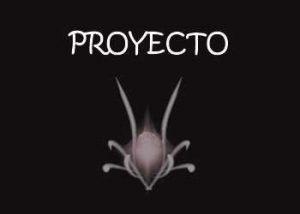 proyecto anvistas